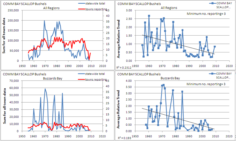 commercial bay scallop trends