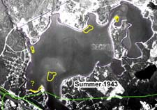 Eelgrass in Buttermilk Bay, summer of 1943