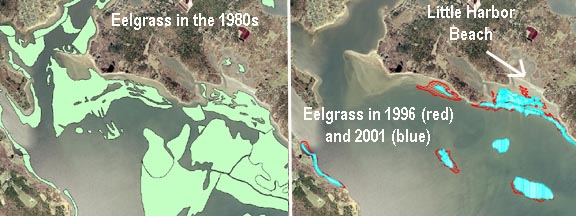 Eelgrass Loss in Wareham, MA