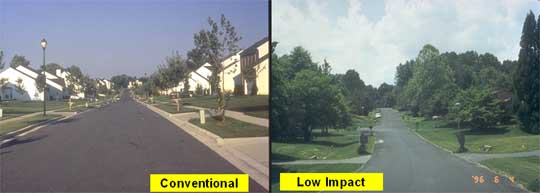 Example of Low Impact Development growth
